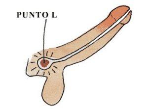 Illustrazione del punto L maschile